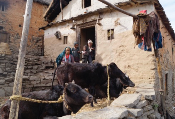 Villagers live in close proximity with livestock